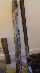 old joists contain dry rot
