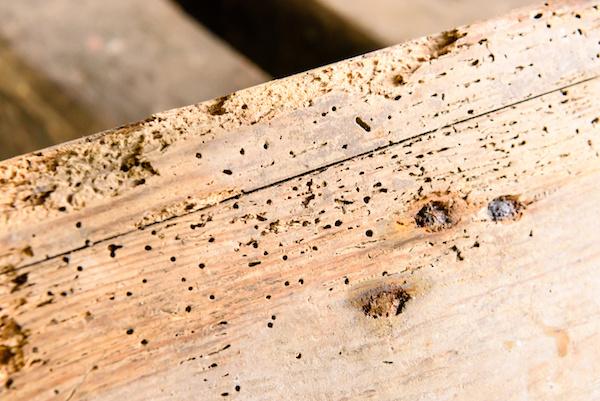 Pauls-Plastering-Llanelli-Woodworm-Treatment