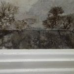 dry rot property in llanelli pauls plastering